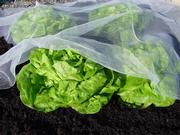 bioclimat salade