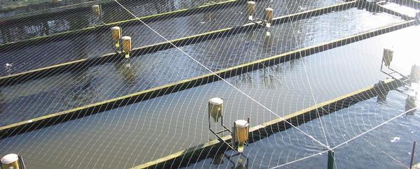 Filet cablé noué pour pisciculture